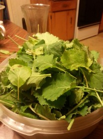Collards from the garden